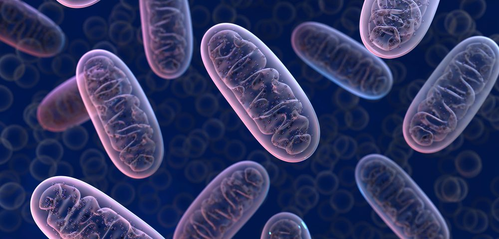 Targeting Mitochondria May Reduce Cancer Cell Proliferation, Invasion